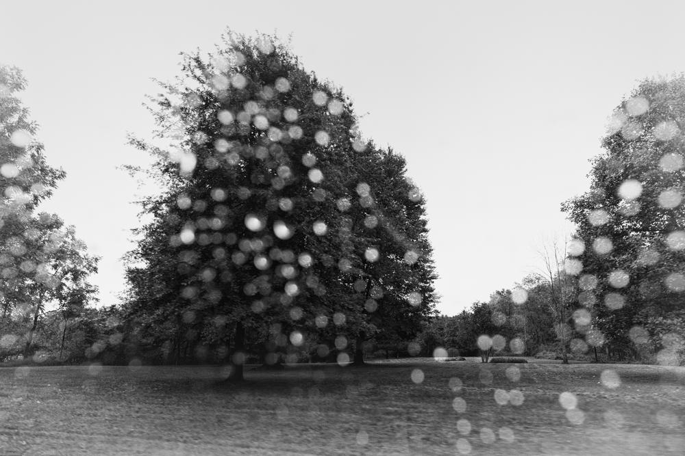 Rain, Tivoli
