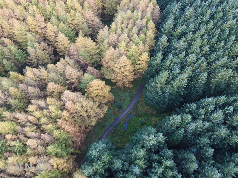 Forest Trees in the Northwest