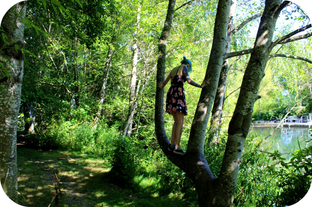 tree climbing.png