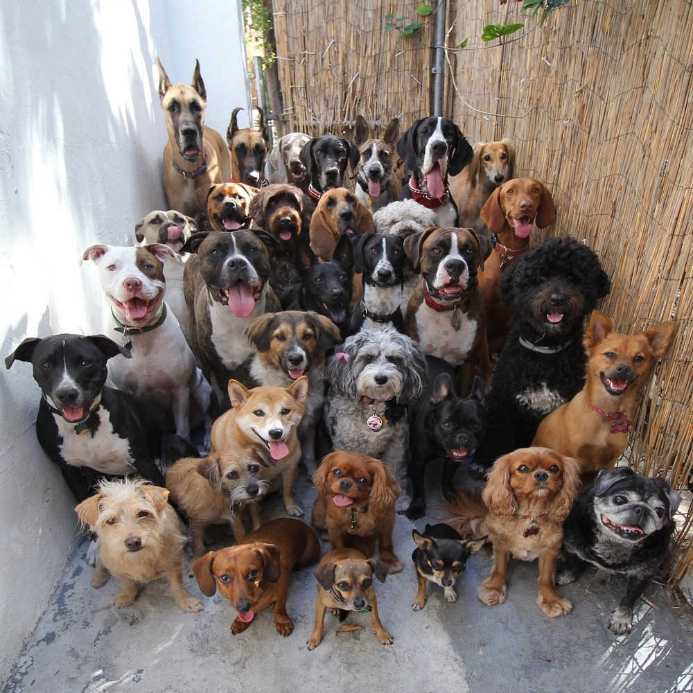 http://www.simplethingcalledlife.com/wp-content/uploads/2015/03/30-dogs-1024x1024.jpg