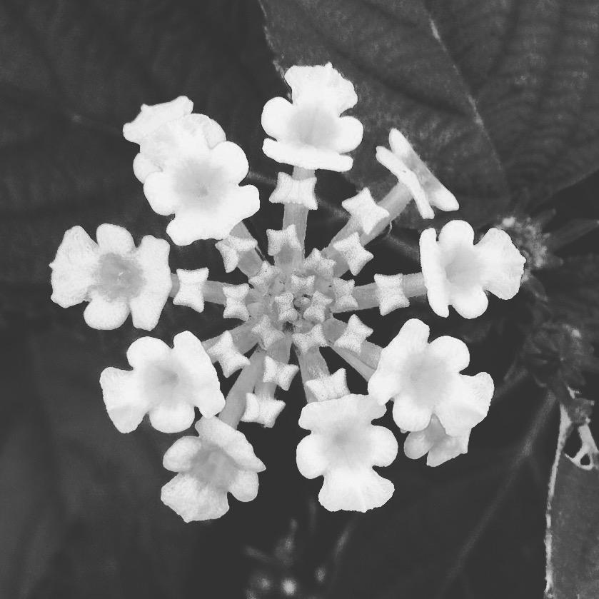 drishti-flower.jpg