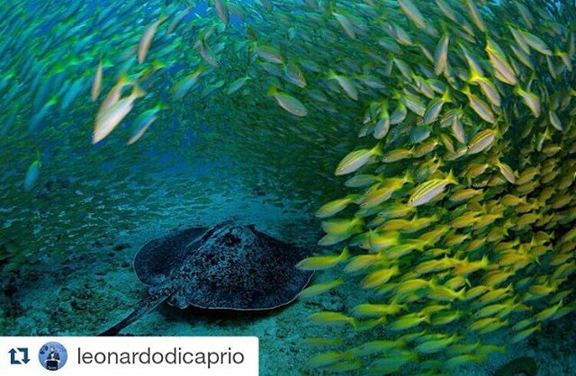 Photo by @manusanfelix_official, @ngpristineseas & @leonardodicaprio. // #WATO #WeAreTheOceans #UNoceans