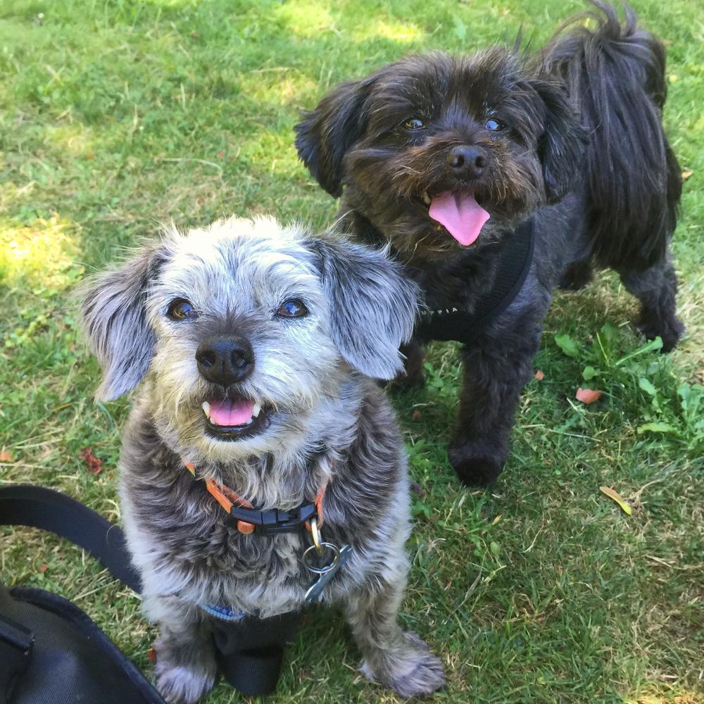 Benny & Moxie