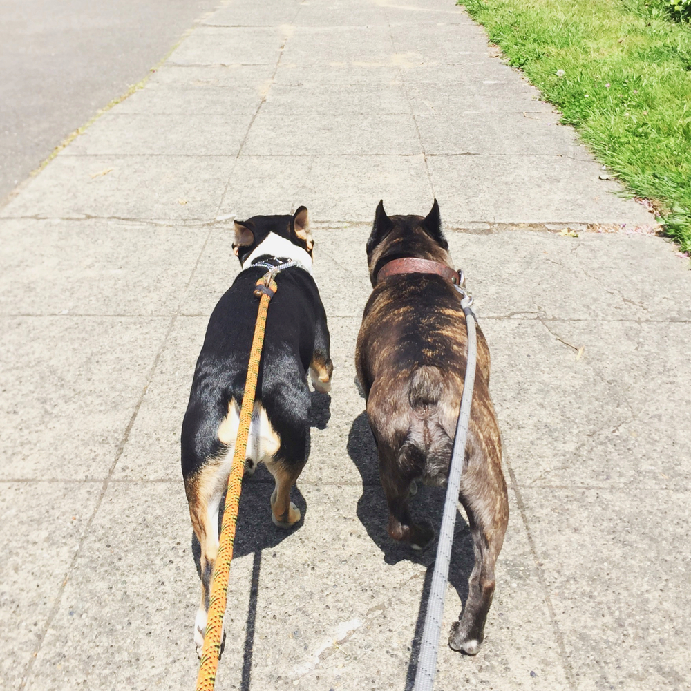 Walkies with Oliver & Benny!