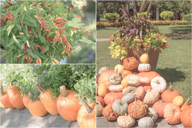 pumpkin collage.jpg