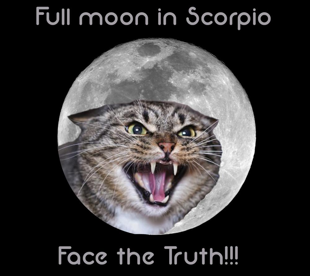 scorpio moon cat.jpg