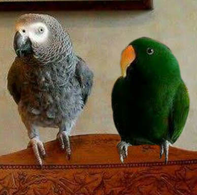 Logan and Nimbus appear as themselves in:   Pet Psychic and Fighting Parrots    Pet Psychic and Parrots Bonus Content