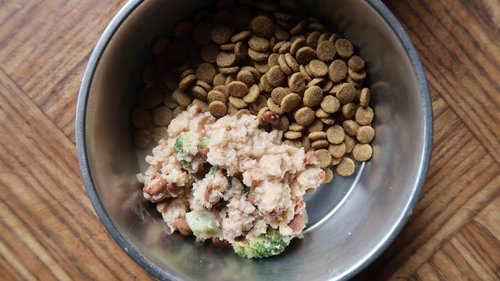 How to make healthy dog food dogs can be plant based too plant homemade vegan dog food and natural balance kibble forumfinder Gallery