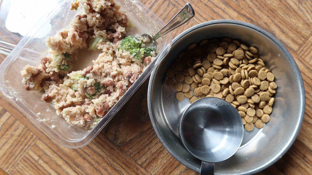homemade vegan dog food and natural balance kibble