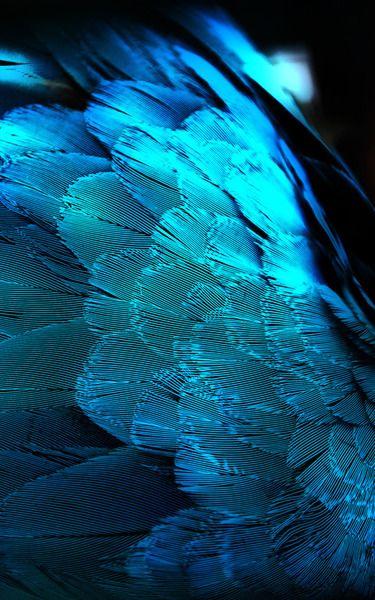 peacock21.jpg