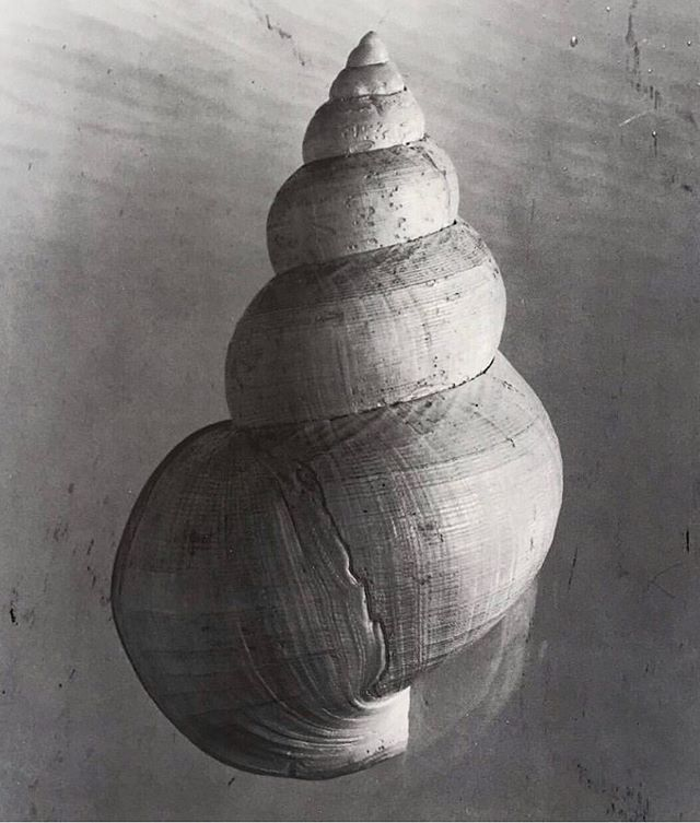 monday inspiration - see snail shell by Hermann Landschoff - 1988. #art #sea #nature #shell