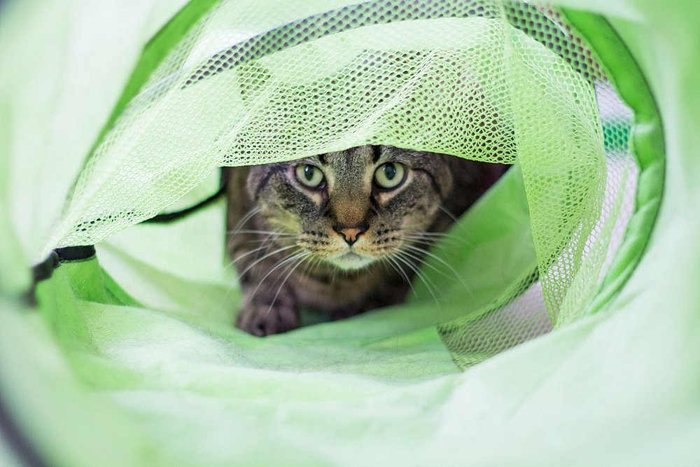 Sabrina Reis Photography | Minneapolis Pet Photography_0003.jpg
