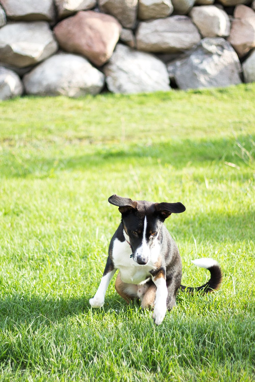 Sabrina Reis Photography | Minneapolis Pet Photography_0030.jpg