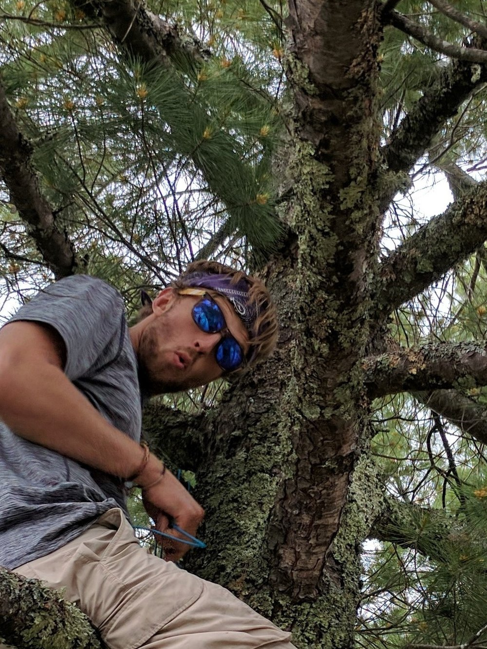 Me in a tree cropped (2).jpg