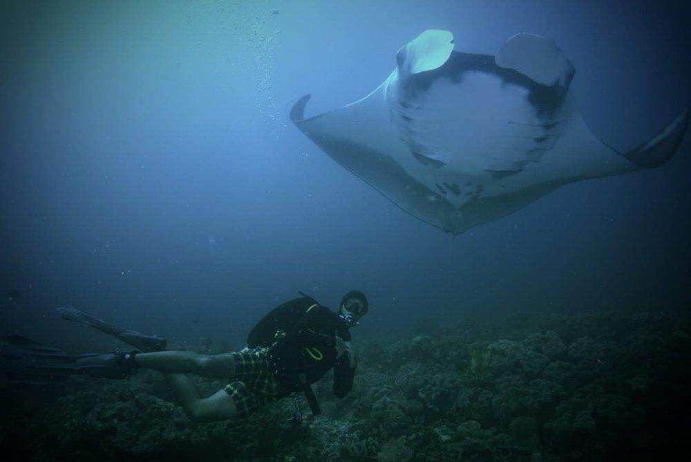 indonesia-diving.jpg