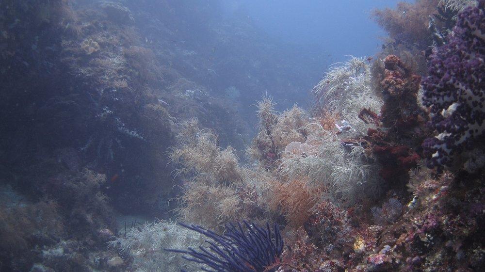 diving-raja-ampat.jpg