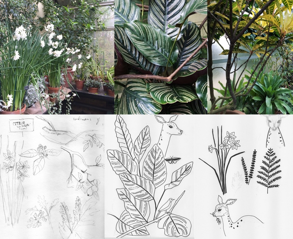 Sabina Radeva, Photos and sketches from the Botanical Garden, Oxford, 2015.