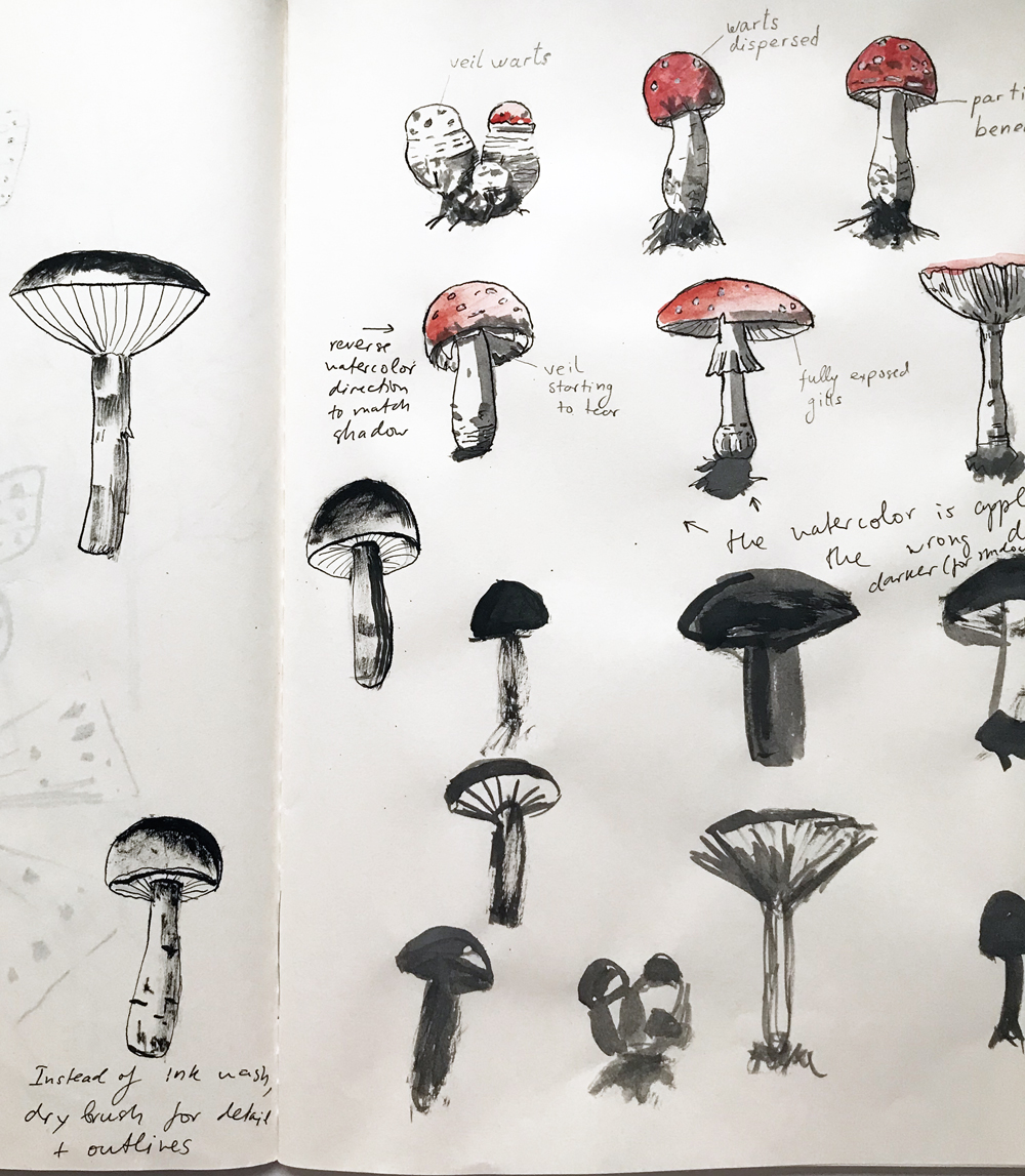 Figure 3.  Mushroom Sketchbook Studies , 2017. Draft pencil, ink, watercolor, Tachikawa dip pen and synthetic brush on paper.