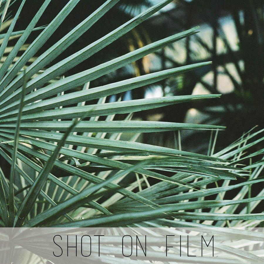 shot on film for website 2.jpg