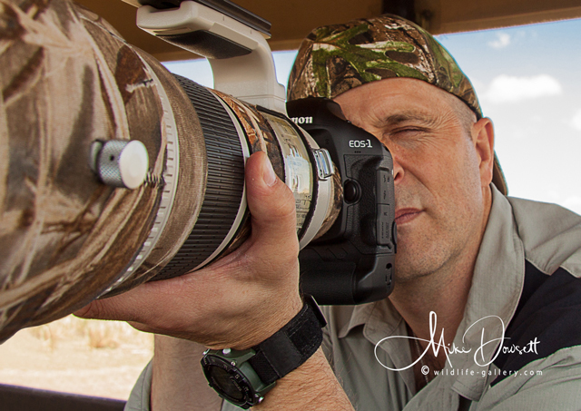 Mike Dowsett - Wildlife Photographer