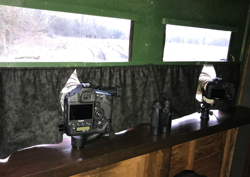 The image above shows the inside the Oxfordshire Wildlife Photography Hide, showing two photographer positions with cameras mounted on gimbal heads...