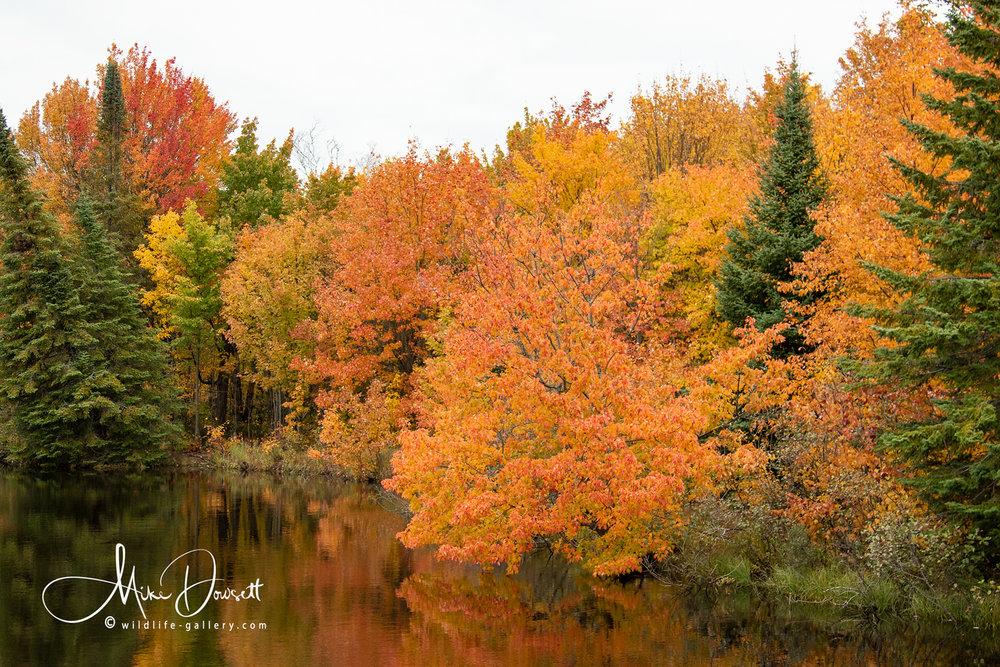 Michigan UP in Fall