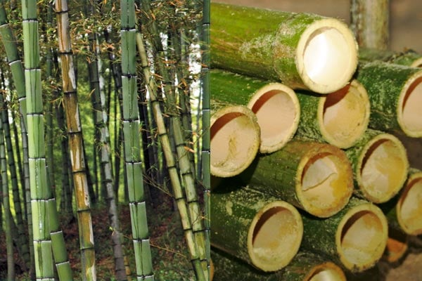 All Things Bamboo Flooring Cobb Hill Construction Inc