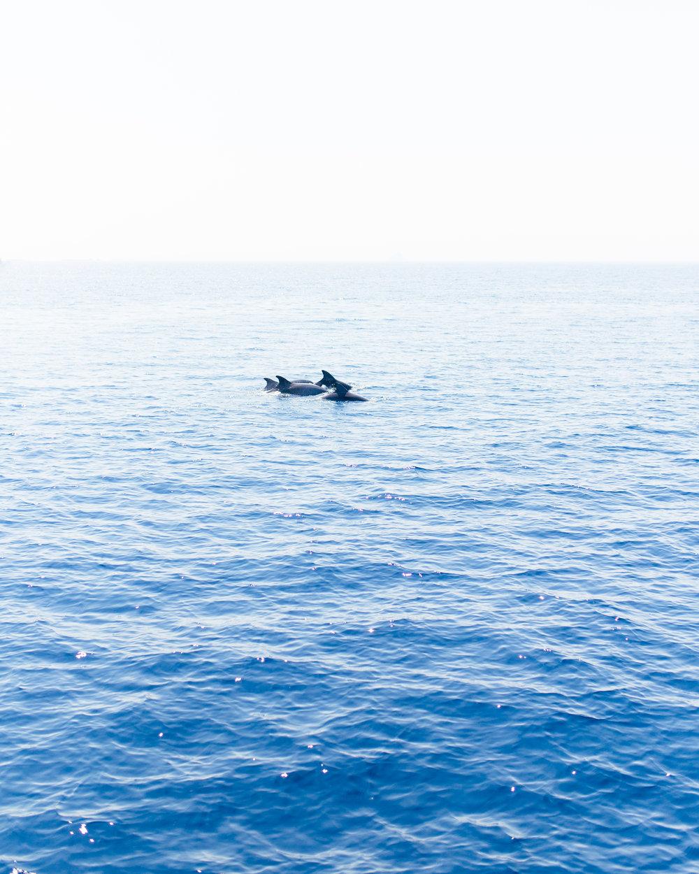 dolphinsyachtgetawayscroatia