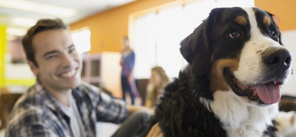SPACESeating  Do you allow pets in the office? The pros & cons by @marcelschwantes via @inc ow.ly/9dCz30cEzwG #officelife #BringYourDogToWorkDay pic.twitter.com/T5GhgpULc4  Jun 23, 2017, 1:55 PM