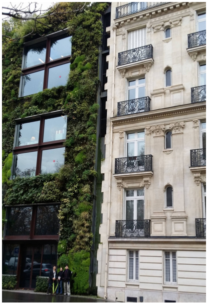Green Wall adjacent to Masonry Wall, Paris – These contrasting building facades employ direct (plants) and indirect (masonry and grill work that mimic organic forms) strategies to achieve successful biophilic effects. Photo Credit: S.R. Kellert