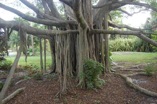 deerfield-beach-arboretum.jpg
