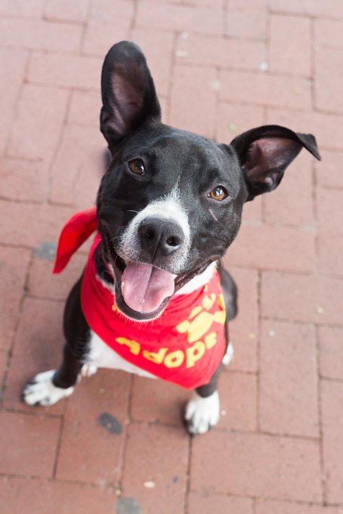e403bec71935 Underdog Blog — Rural Dog Rescue