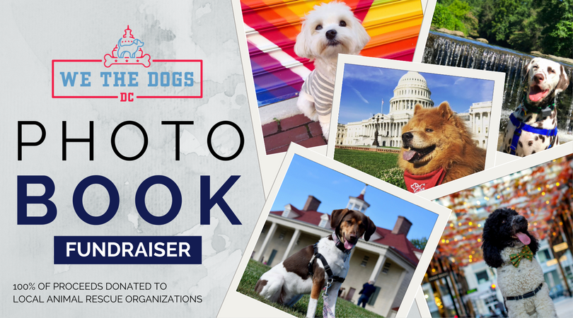 Vote for Rural Dog Rescue! - Help Us Root For the Underdog!