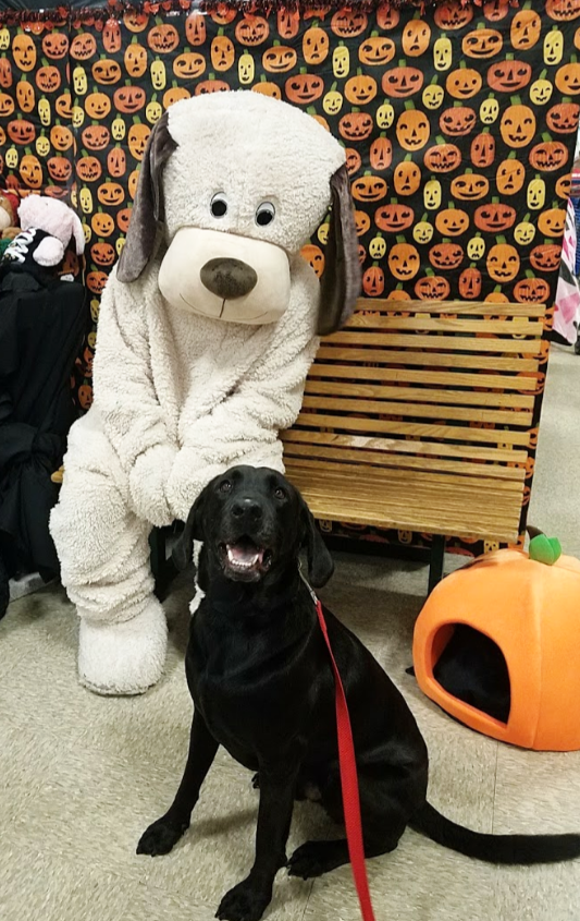 "Happy Tail: Dean (FKA Diesel) - Oct. 2018: Dean was rescued from rural North Carolina as a stray. Soon after his adoption from RDR, he enjoyed attending trick-or-treating at Petsmart.His family says: ""He's such a sweet soul and a joy to have around. We are very happy with him!"