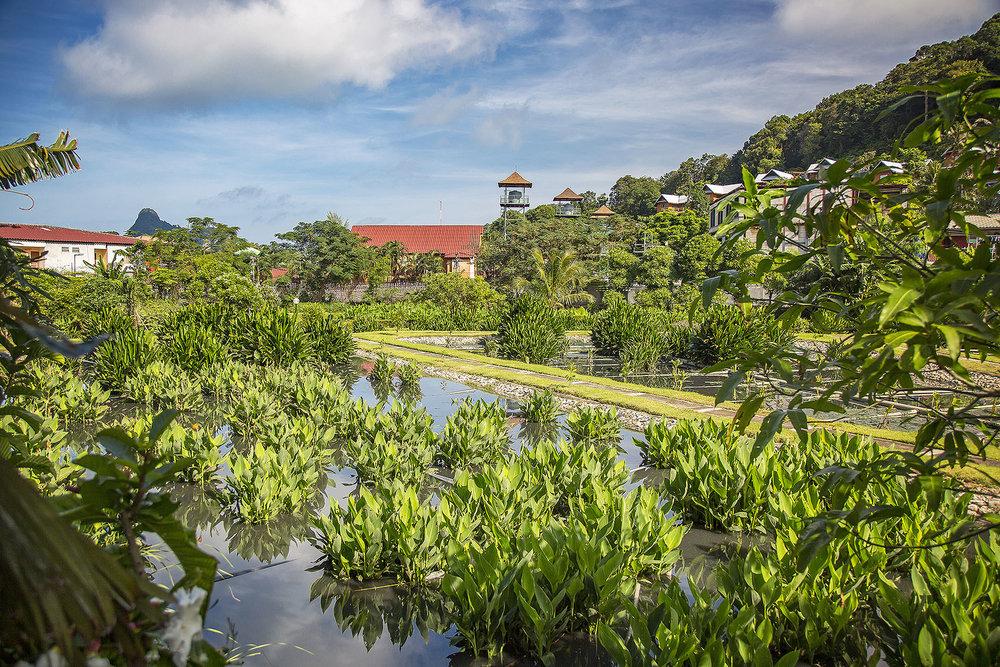 Thailand_0M2A8458-e_webuse.jpg
