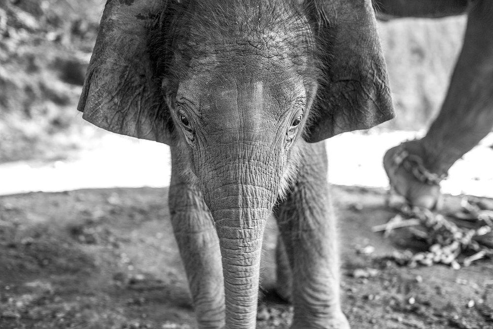 Thailand_0M2A9623-e-bw_webuse.jpg