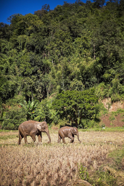 Thailand_0M2A9723-e_webuse.jpg