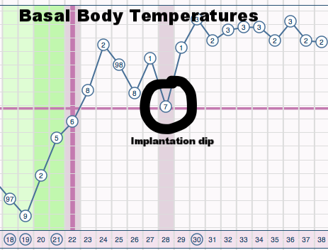 "Circled is the ""implantation dip"" in basal body temperature (BBT)"