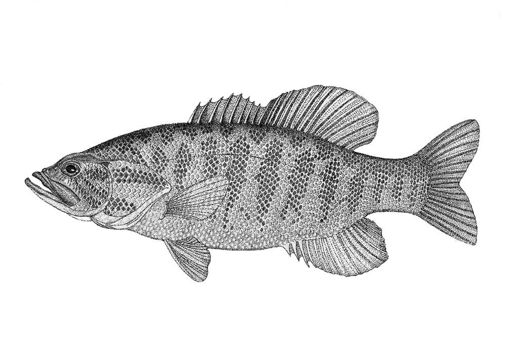 Fish 5.jpg
