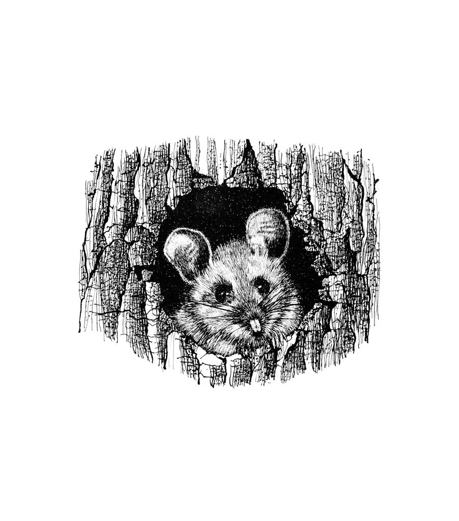 mouse-1.jpg