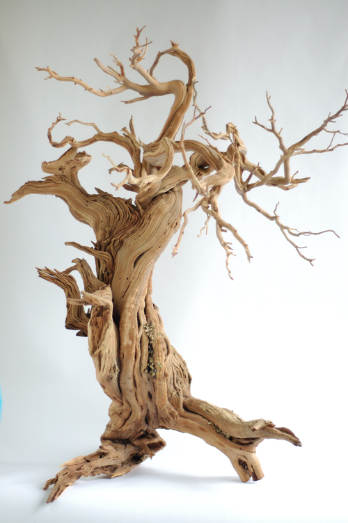 manzanita trees and branches, grapevine branches and trunks, driftwood, and  larger tree slabs for use as accent pieces or as standalone decorative  displays.