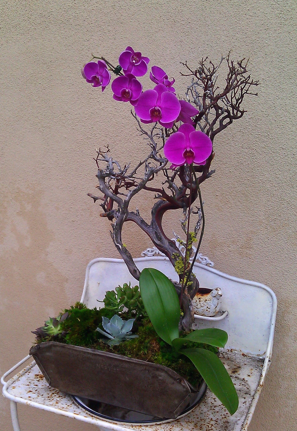 purple orchids in tin.jpg