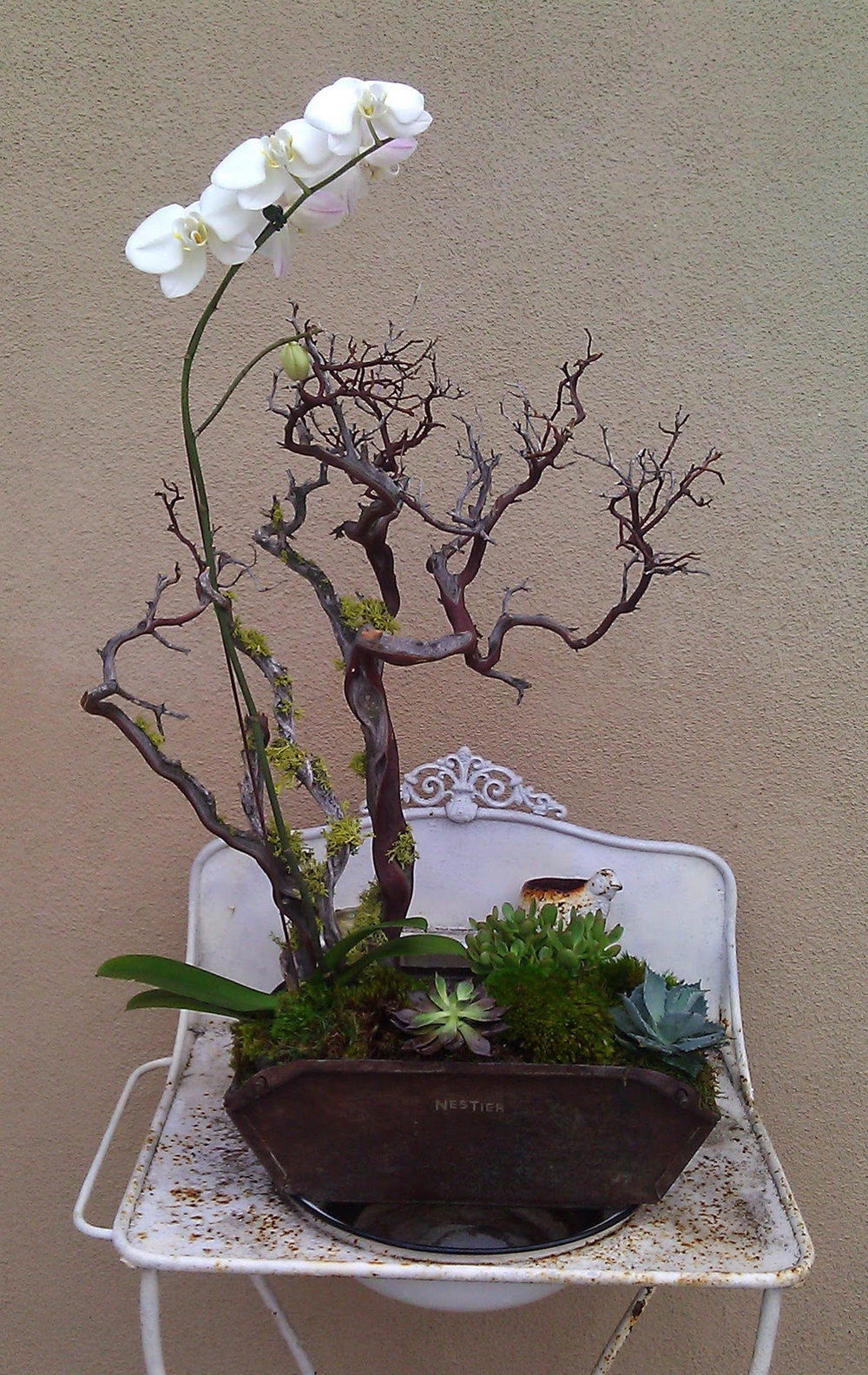 white orchid in tin.jpg