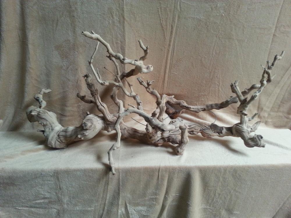 grapevine branch (2).jpg