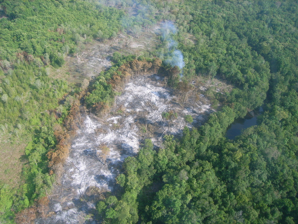When Wildlife Alliance arrived in Cambodia in 2000, there were nearly 40 forest fires a day.