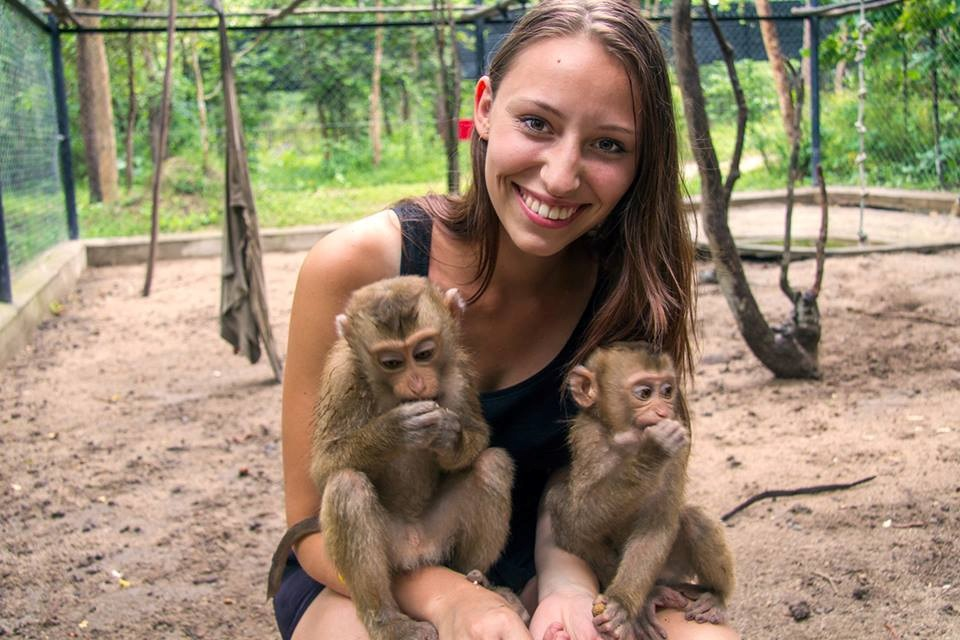 Play with Baby Macaques