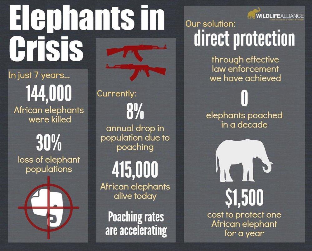 Elephants in Crisis