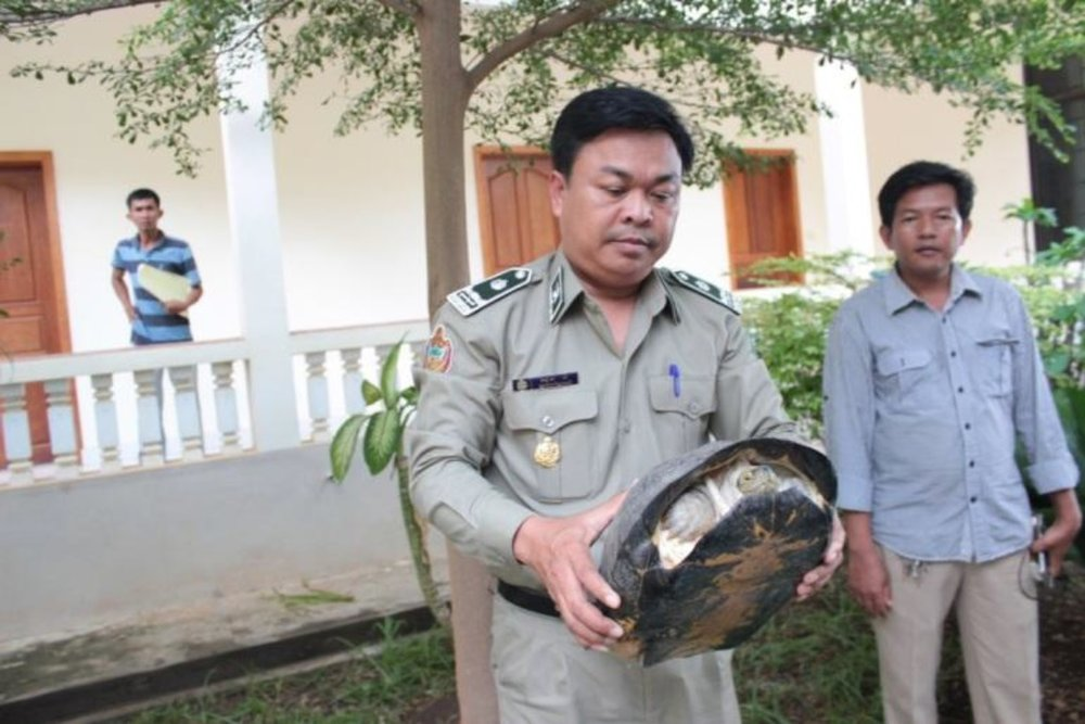 2016-07-28 - WRRT - 96 turtles seized rescued - Bantheay Meanchey Province.jpg
