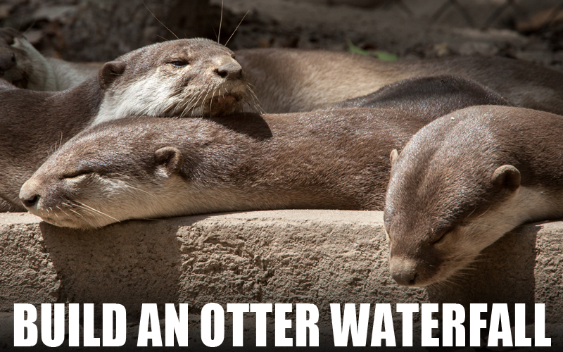 WA rescued otters