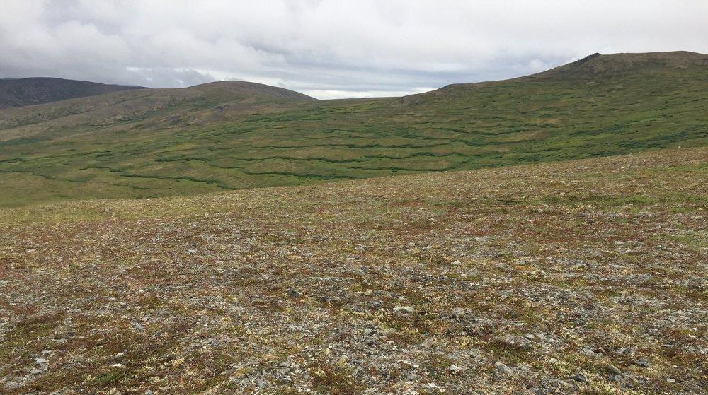 Soilfluction at Skookum Pass, Seward Peninsula, Alaska 2018